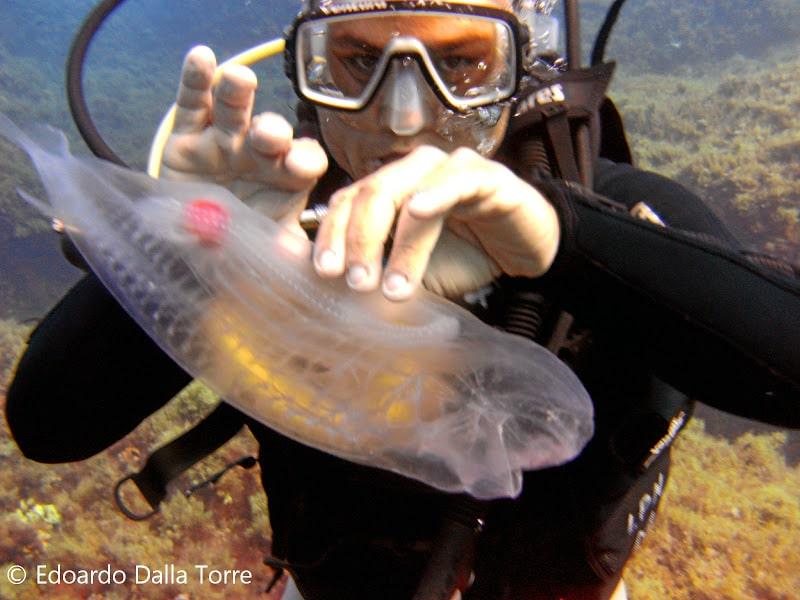 peixe-transparente