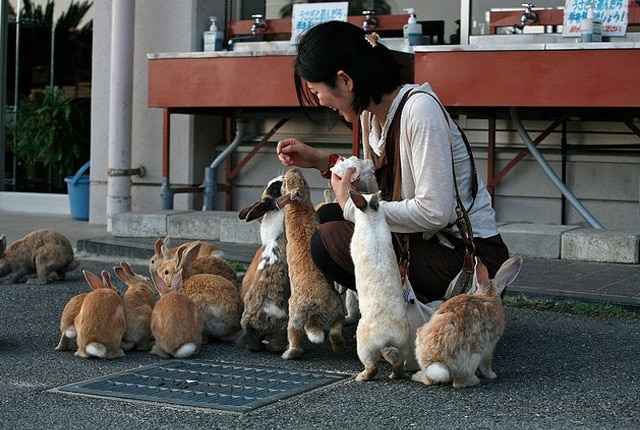 Ilha japonesa dominada por coelhos