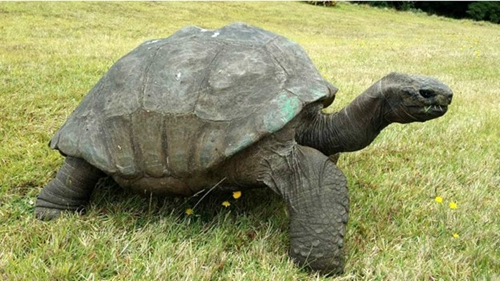 Tartaruga mais velha do mundo