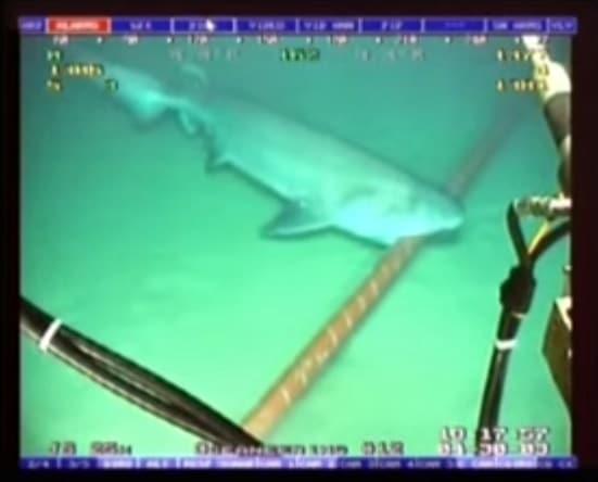 Tubarão vs Google