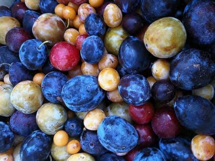 Árvore de 40 frutas