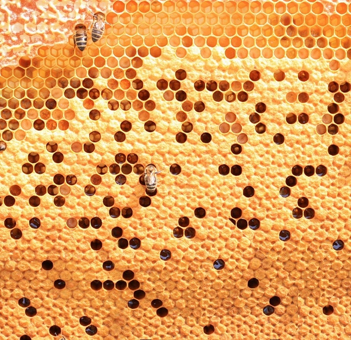 abelhas-colmeias