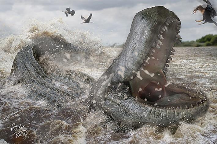 'Purussaurus brasiliensis'