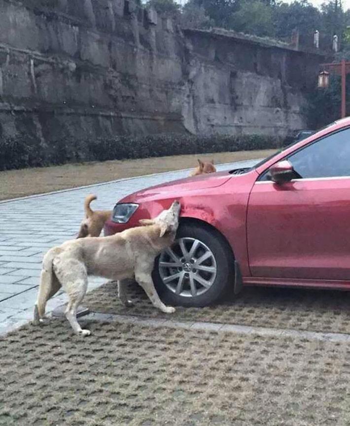 Ataque de cachorros