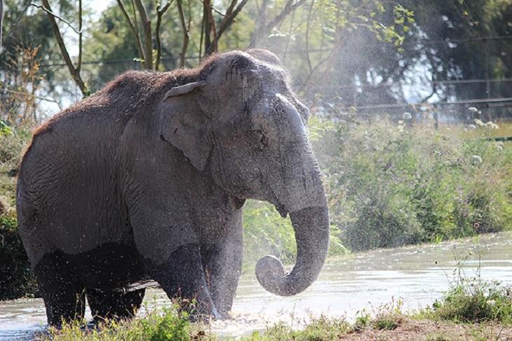 Santuário de elefantes será implementado no Mato Grosso