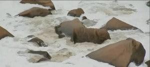 Rio Tietê precisa de nova limpeza