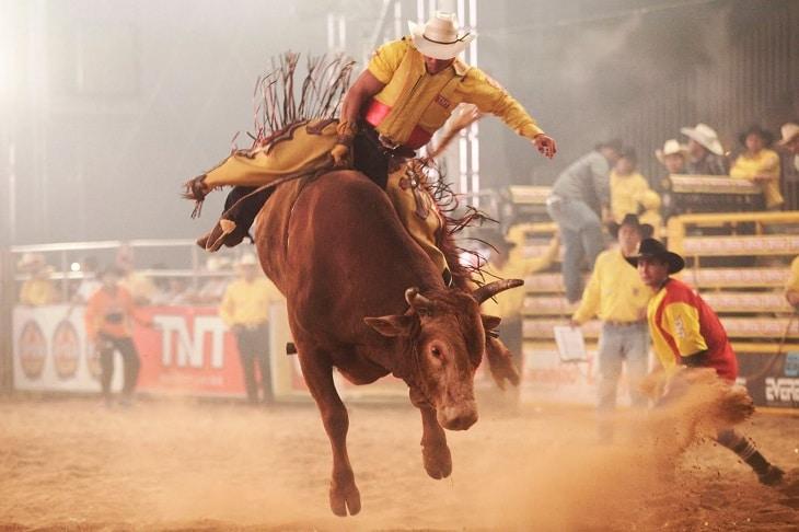 Touros e outros animais são montados durante rodeios no Brasil