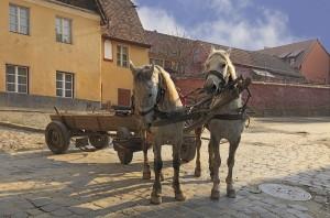 Cavalos puxando carroça
